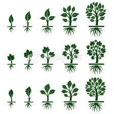 graine - arbre